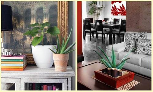 Plantas Ideais para Ter Dentro de Casa (2)