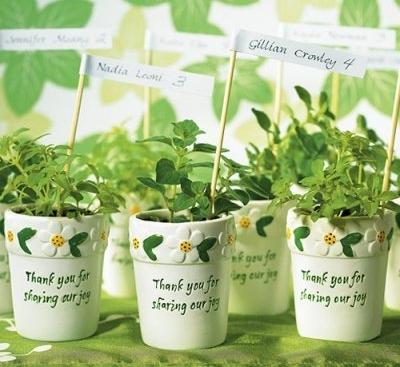 presente ecologico - planta